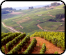 Wine Region, Wines and vineyards of France