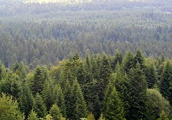 Jura Pine Forests Route tour, panoramic photo