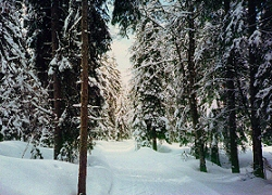 Cross-Country ski trail, Jua ski resorts