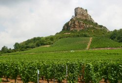 Maconnais wine tour in Burgundy wine region of France