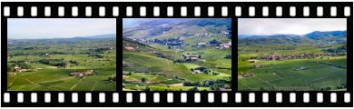 Beaujolais appellation vineyard photos and Images
