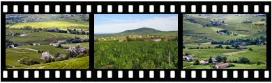 Beaujolais appellation vineyards photos and images