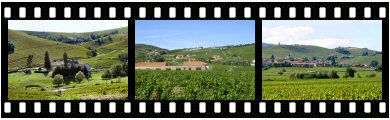 Beaujolais-Villages appellation vineyards photos and images