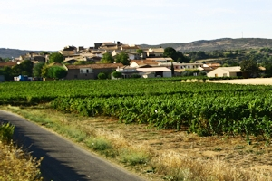 Clairette du Languedoc appellation, Languedoc wines and food pairing tips