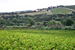 Corbières appellation, Languedoc wine and food pairing tips