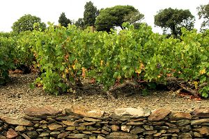 Faugeres, Languedoc wine and food pairing tips